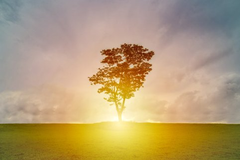 tree_silhouette_sun