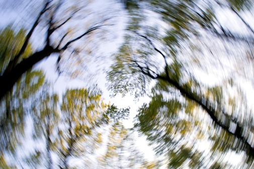 trees spinning dizzily