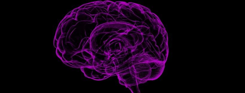 purple-hued image of a brain