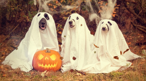dogs dressed up as ghosts