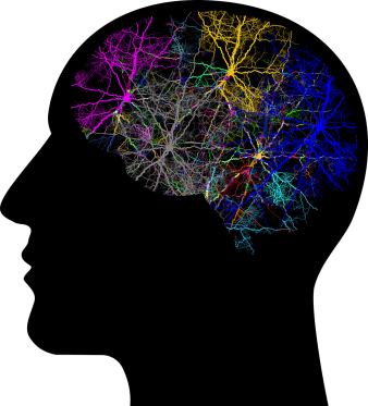 synapses lighting up the brain