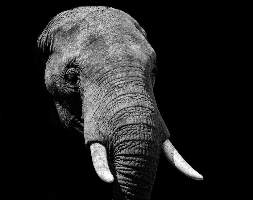 elephant head, body in shadow