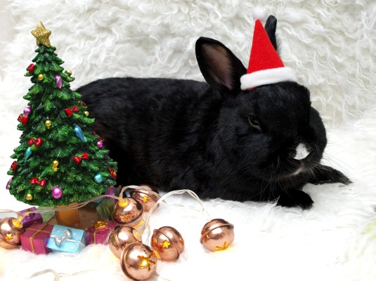 rabbit wearing santa hat