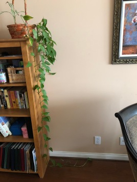 vine trailing down bookcase
