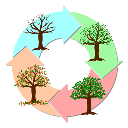 circle showing a tree in each of the four seasons